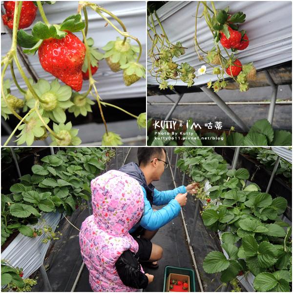 2017-12-18親親農場採草莓 (5).jpg