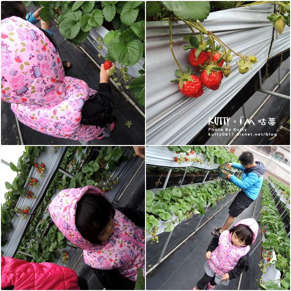 2017-12-18親親農場採草莓 (6).jpg