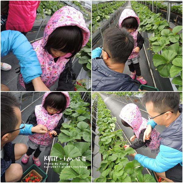 2017-12-18親親農場採草莓 (8).jpg