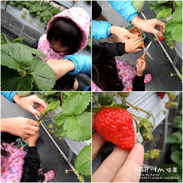 2017-12-18親親農場採草莓 (9).jpg