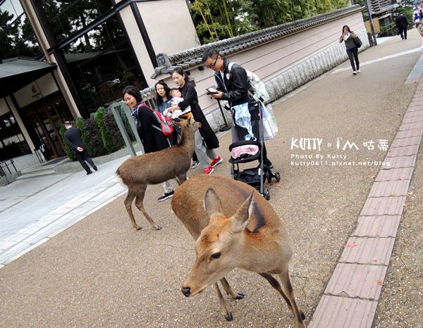 4奈良交通 (11).jpg