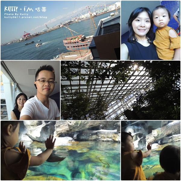 2海遊館 (12).jpg