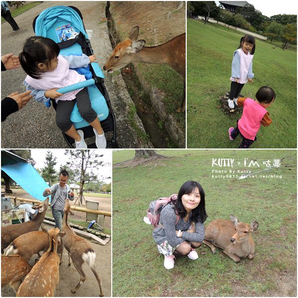 4奈良餵鹿 (1).jpg