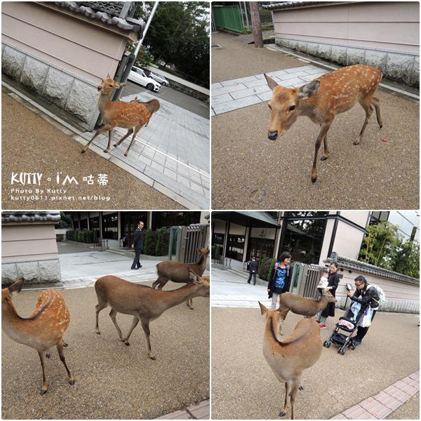 4奈良餵鹿 (4).jpg