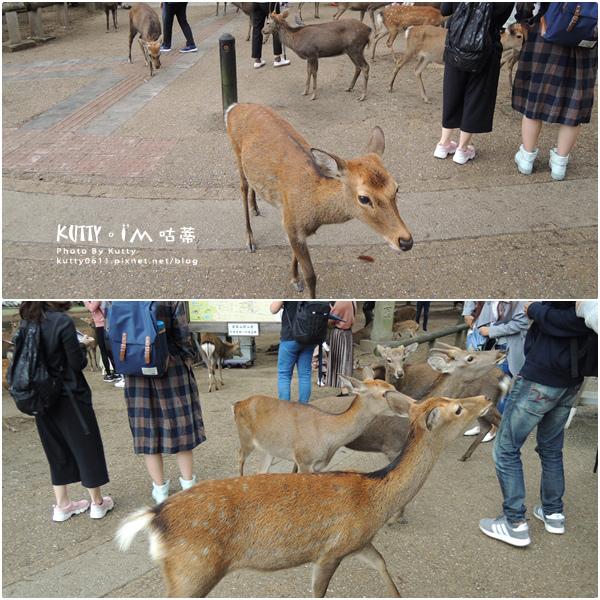 4奈良餵鹿 (6).jpg