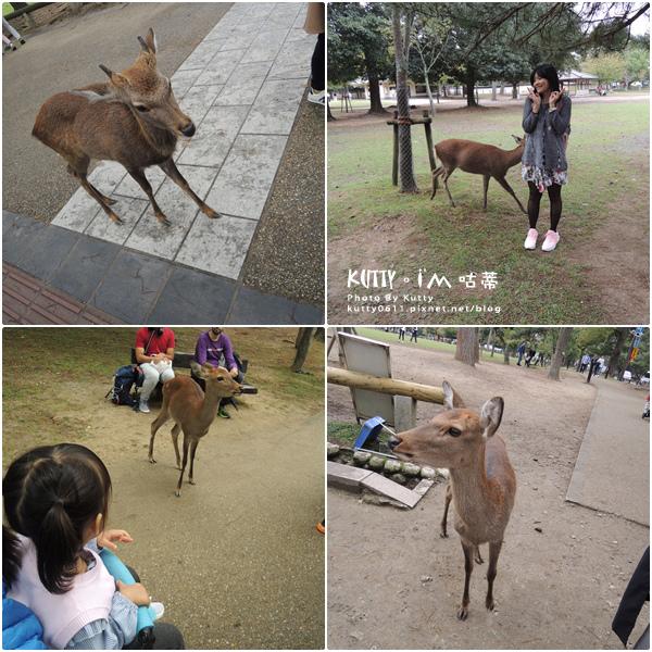 4奈良餵鹿 (10).jpg