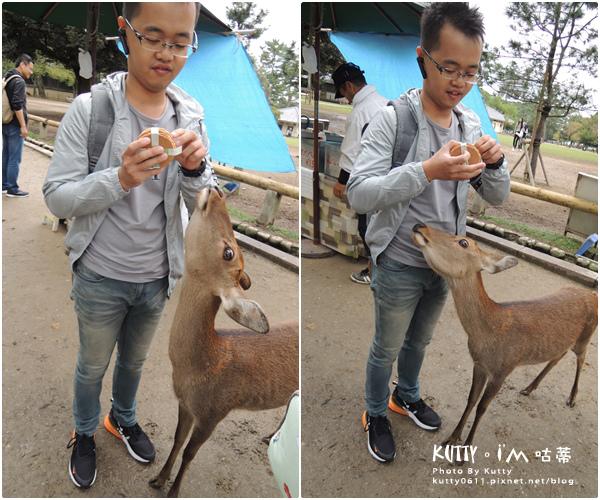 4奈良餵鹿 (11).jpg
