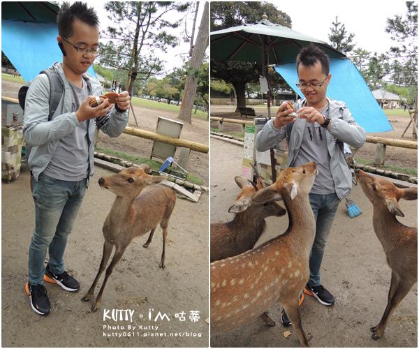 4奈良餵鹿 (12).jpg