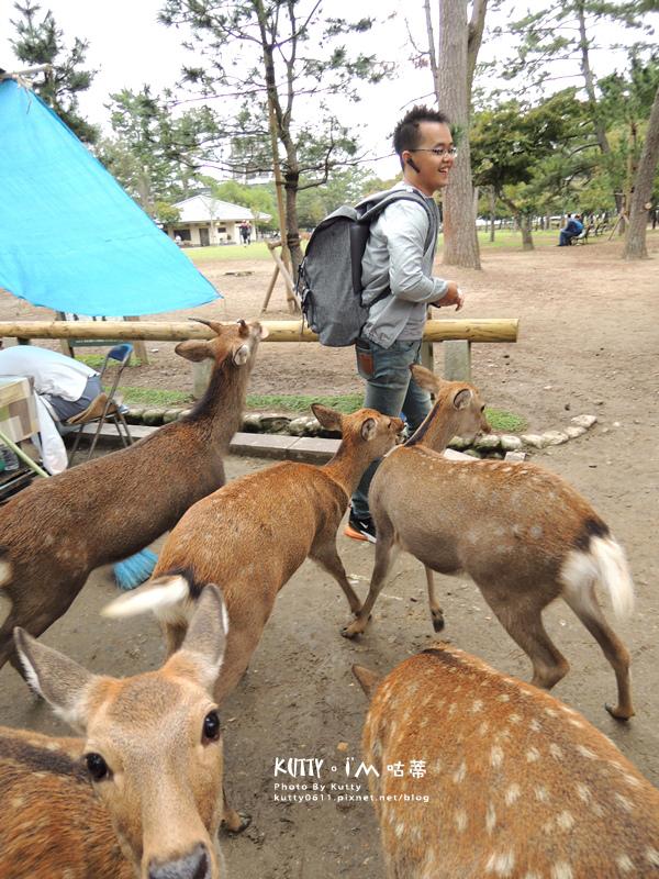 4奈良餵鹿 (14).jpg