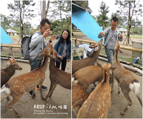 4奈良餵鹿 (13).jpg