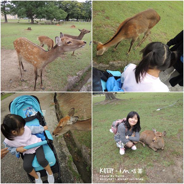 4奈良餵鹿 (16).jpg