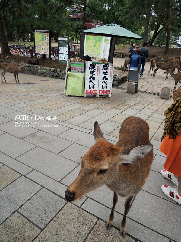 4奈良餵鹿 (24).jpg