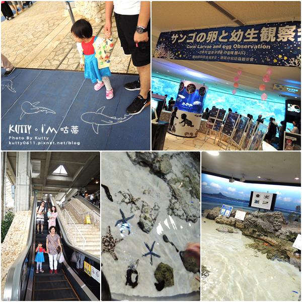 4沖繩海洋博公園-美麗海水族館-海豚劇場 (9).jpg