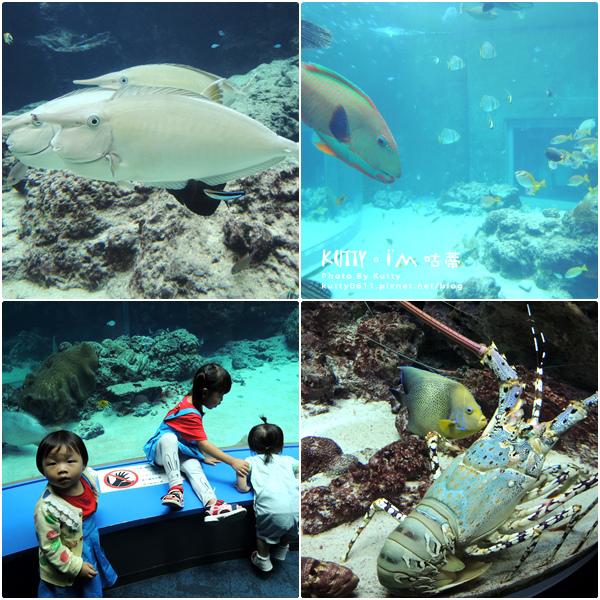 4沖繩海洋博公園-美麗海水族館-海豚劇場 (12).jpg