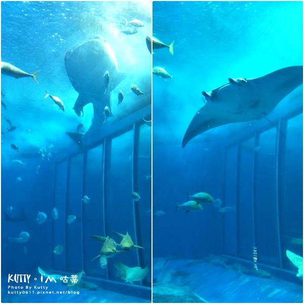 4沖繩海洋博公園-美麗海水族館-海豚劇場 (15).jpg