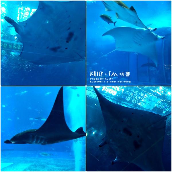 4沖繩海洋博公園-美麗海水族館-海豚劇場 (17).jpg