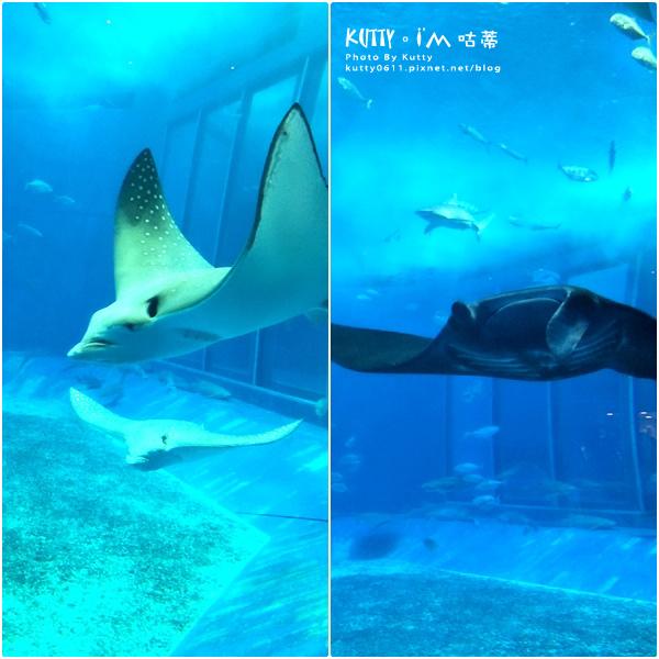 4沖繩海洋博公園-美麗海水族館-海豚劇場 (16).jpg