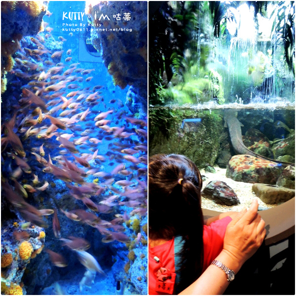 4沖繩海洋博公園-美麗海水族館-海豚劇場 (13).jpg