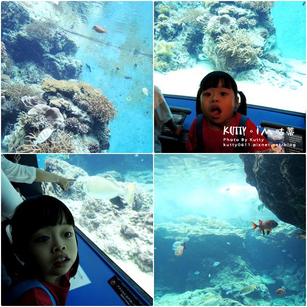 4沖繩海洋博公園-美麗海水族館-海豚劇場 (11).jpg