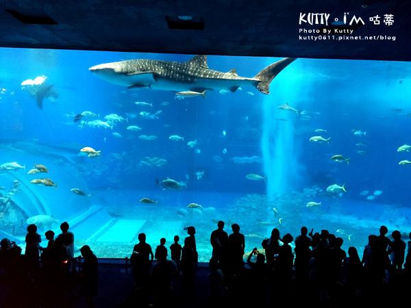 4沖繩海洋博公園-美麗海水族館-海豚劇場 (14).jpg