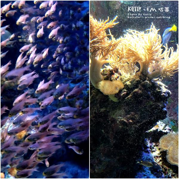 4沖繩海洋博公園-美麗海水族館-海豚劇場 (20).jpg
