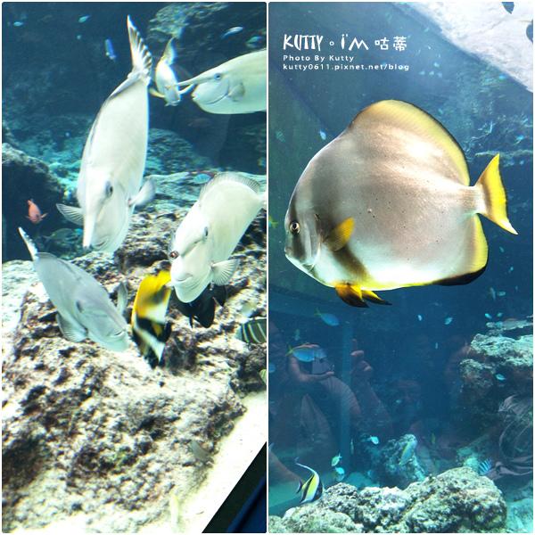 4沖繩海洋博公園-美麗海水族館-海豚劇場 (21).jpg