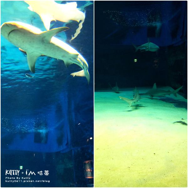 4沖繩海洋博公園-美麗海水族館-海豚劇場 (19).jpg