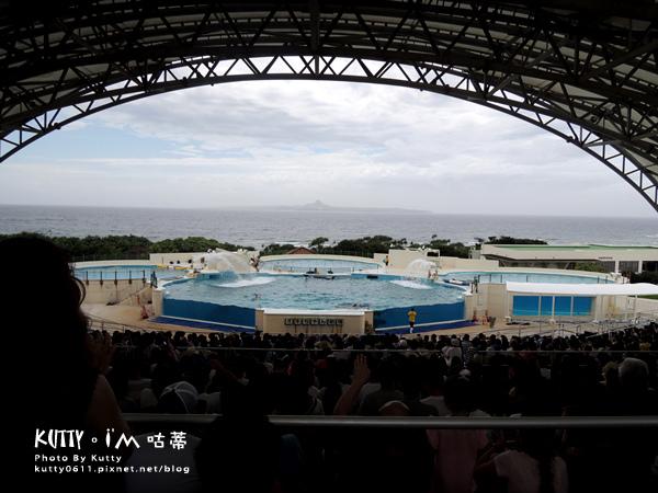 4沖繩海洋博公園-美麗海水族館-海豚劇場 (26).jpg