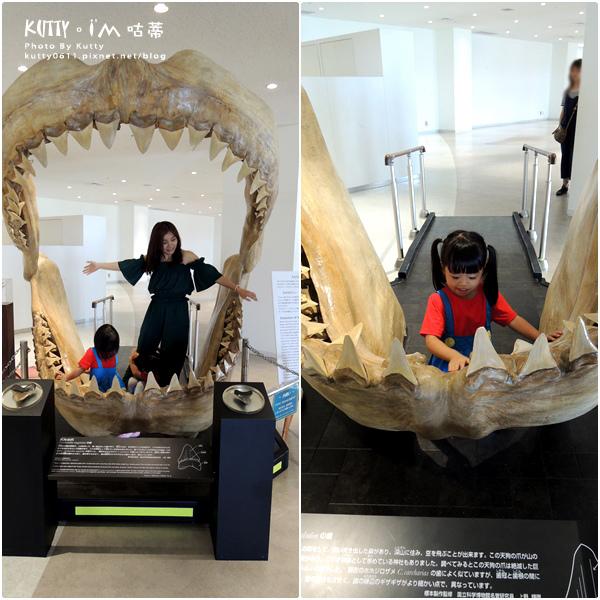 4沖繩海洋博公園-美麗海水族館-海豚劇場 (24).jpg