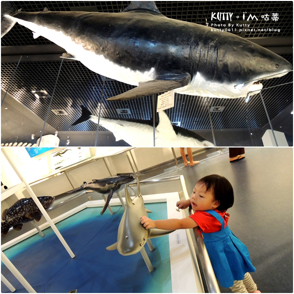 4沖繩海洋博公園-美麗海水族館-海豚劇場 (23).jpg