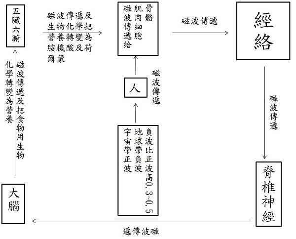 經絡與磁波.JPG