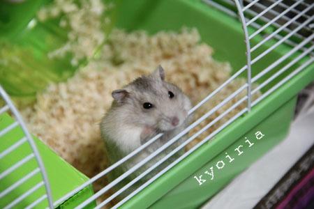 鼠鼠.jpg
