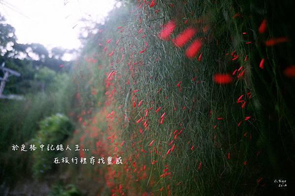 201110南庄