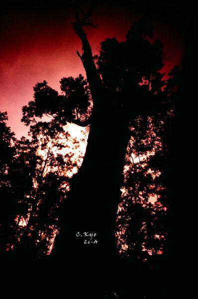 2010台中溪頭森林區