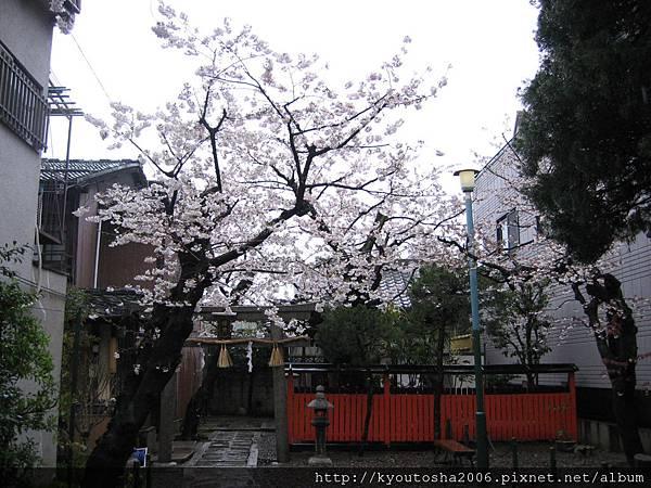 2006京都四月 232
