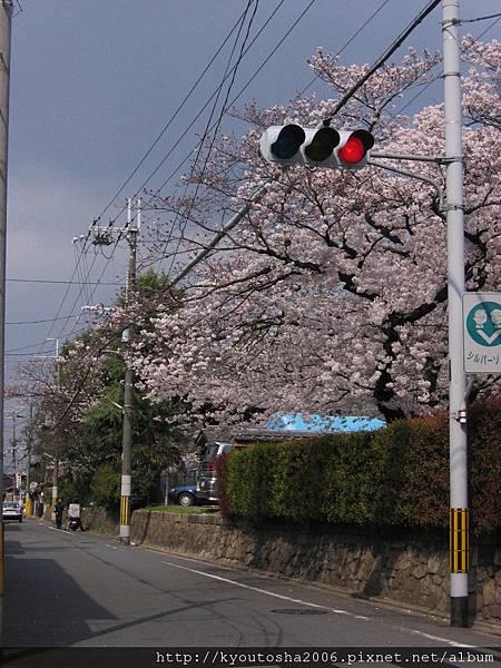 2006京都四月 026