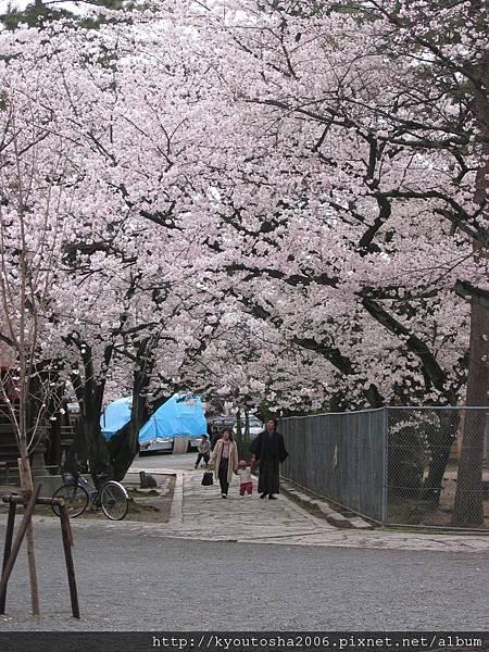 京都立本寺-1