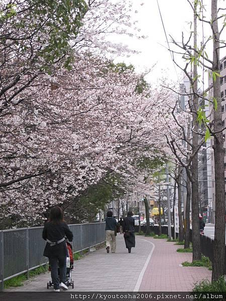 2006京都四月 259