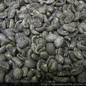 乾燥式 含水量超高的羅布斯塔生豆