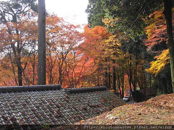 京都高雄楓紅-3