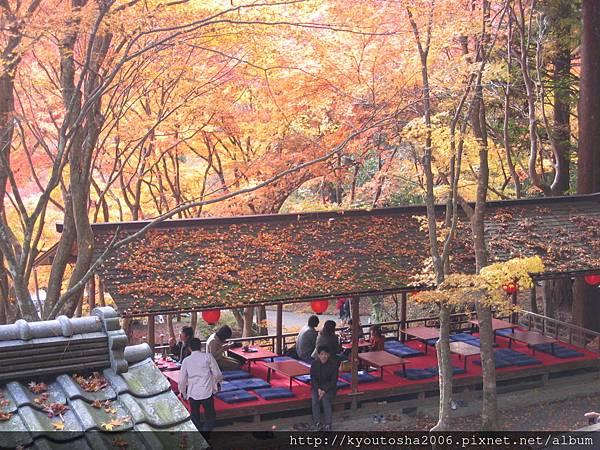 京都高雄楓紅