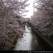 桜01 012.jpg
