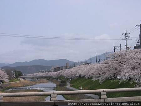 高野川2.jpg