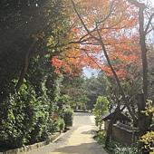 kyoto-201012 453.jpg