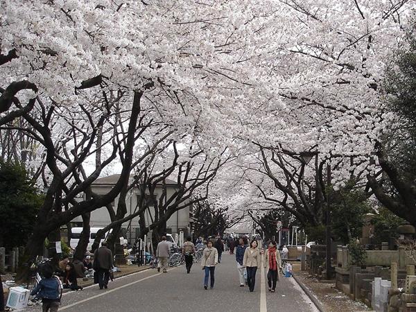 800px-Yanaka_cemetery.jpg
