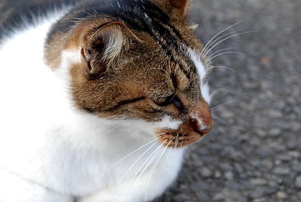 cats_0309