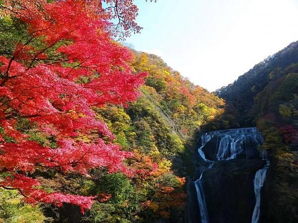 見頃となった袋田の滝の紅葉