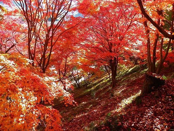 京都にいるかと思わせるような素晴らしさ・・・