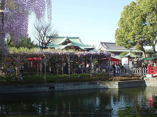 1280px-Kameido_shrine_wisteria_festival2