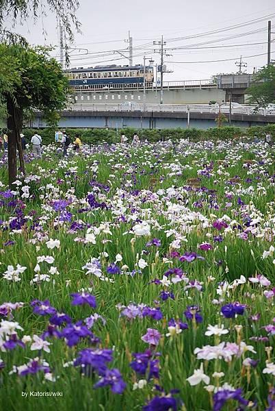 Itako-Ayame-en,JR_Kashima-Line,Itako-city,Japan